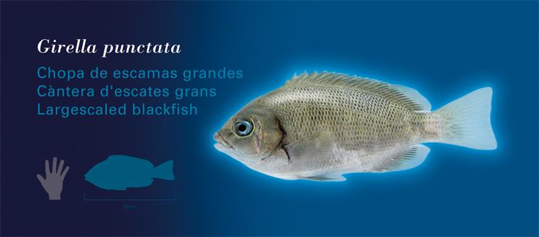 Fichas Especies Marinas L'Oceanogràfic